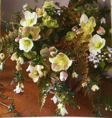 Gorgeous hellebore display