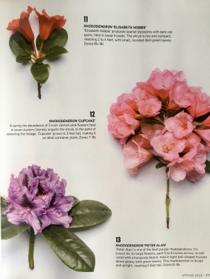 Feature on rhodies in the Spring 2018 edition!