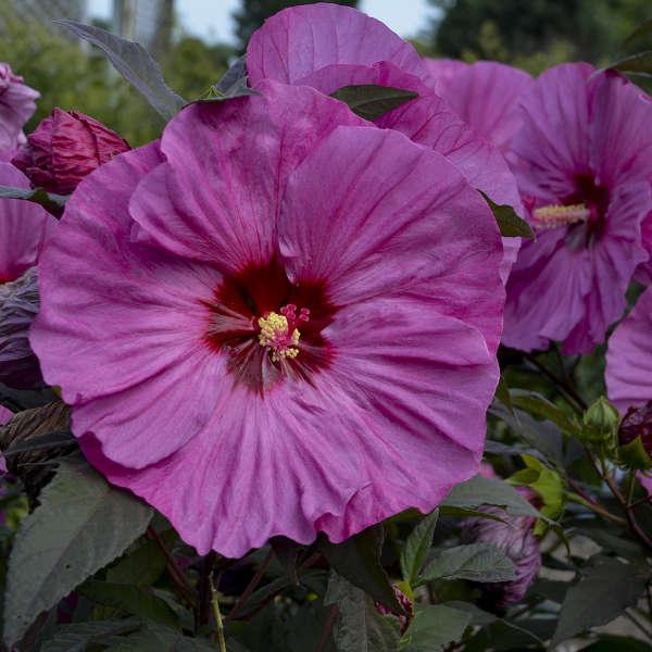 Top Plant Picks Of 2019 D Avenue Nursery